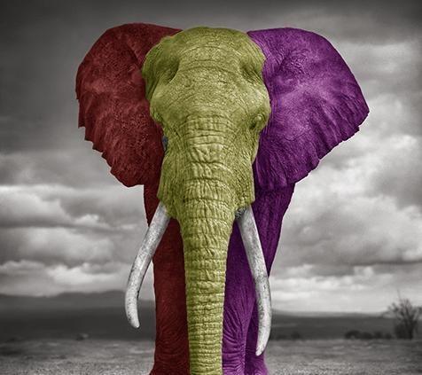 uke45 dyr AFRIKA 01.jpg