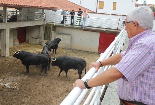 Una vista de los toros de Fuente Ymbro desembarcados esta mañana