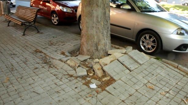Una vista de los destrozos que están causando en el pavimento las raíces de los arboles